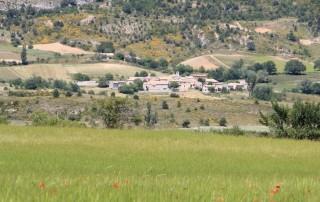 Petit Épeautre de Haute Provence - Mévouillon fin juin 2013