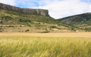 peti épeautre de Haute Provence Prieuré 2 juillet 2017